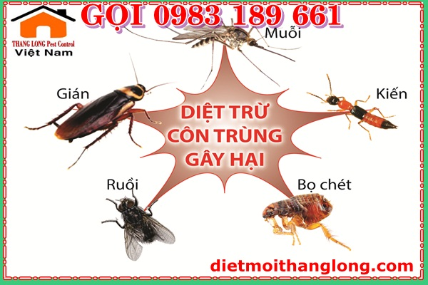 DIET CON TRUNG SO 1 THANG LONG